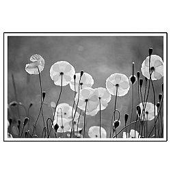 TEMPO KONDELA Zasklený tlačený obraz, čierno-biely, DX TYP 19 FLOWERS